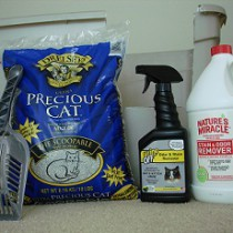 Products To Clean Cat Urine From Carpet
