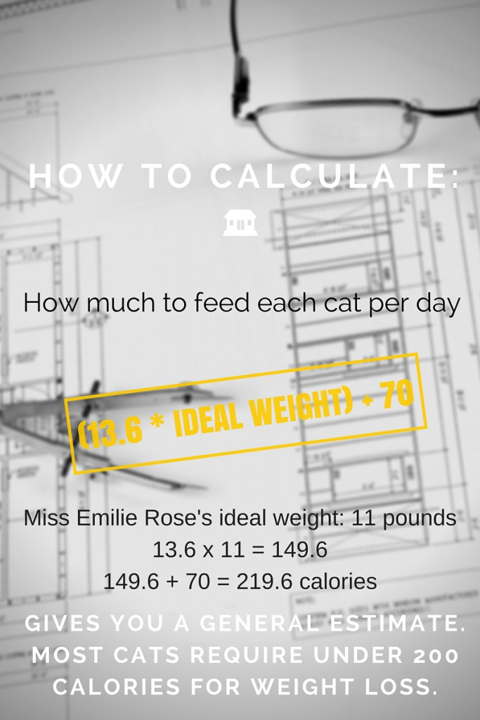 How To Calculate Calories