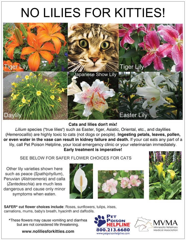 No Lilies for Kitties