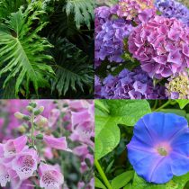 plants that are toxic to cats